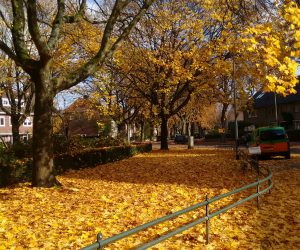 Outono na Holanda